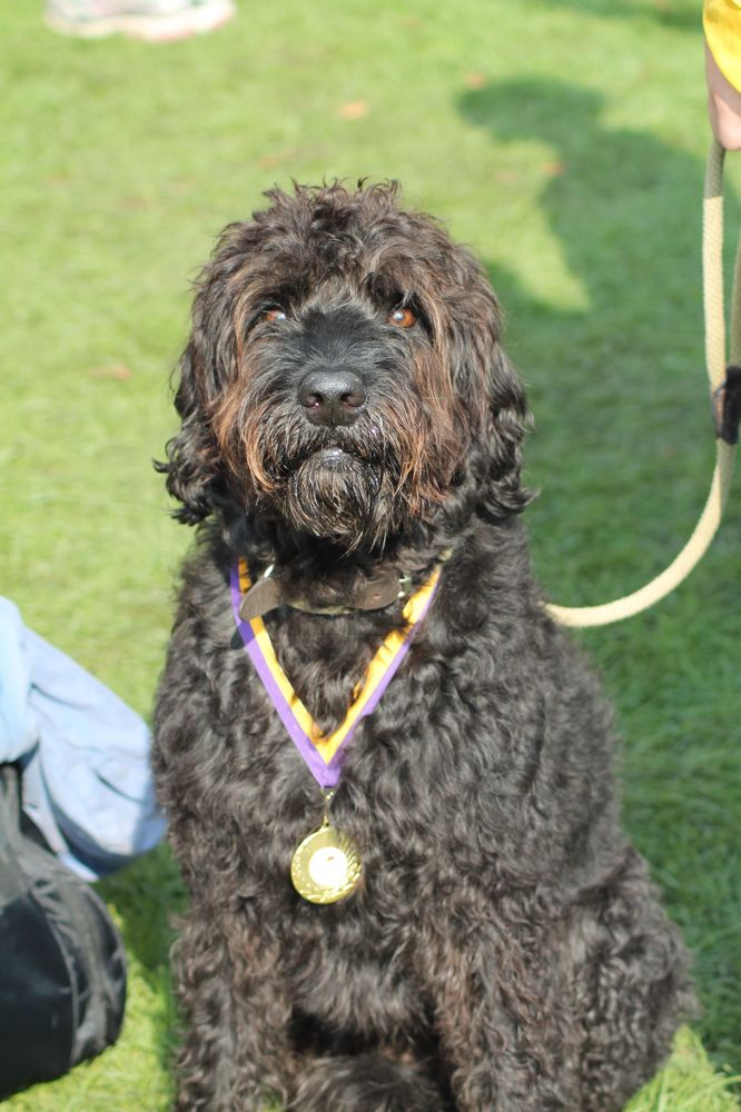 Chariots of Fire Dog